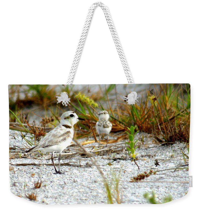 Plover Weekender Tote Bag featuring the photograph Snowy Plover And Chick by Larry Allan
