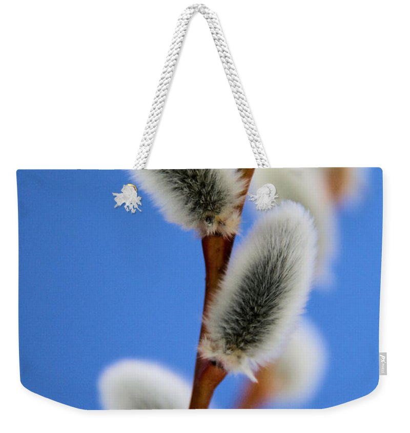 Pussy Willow Weekender Tote Bag featuring the photograph Soft And Furry by Doris Potter