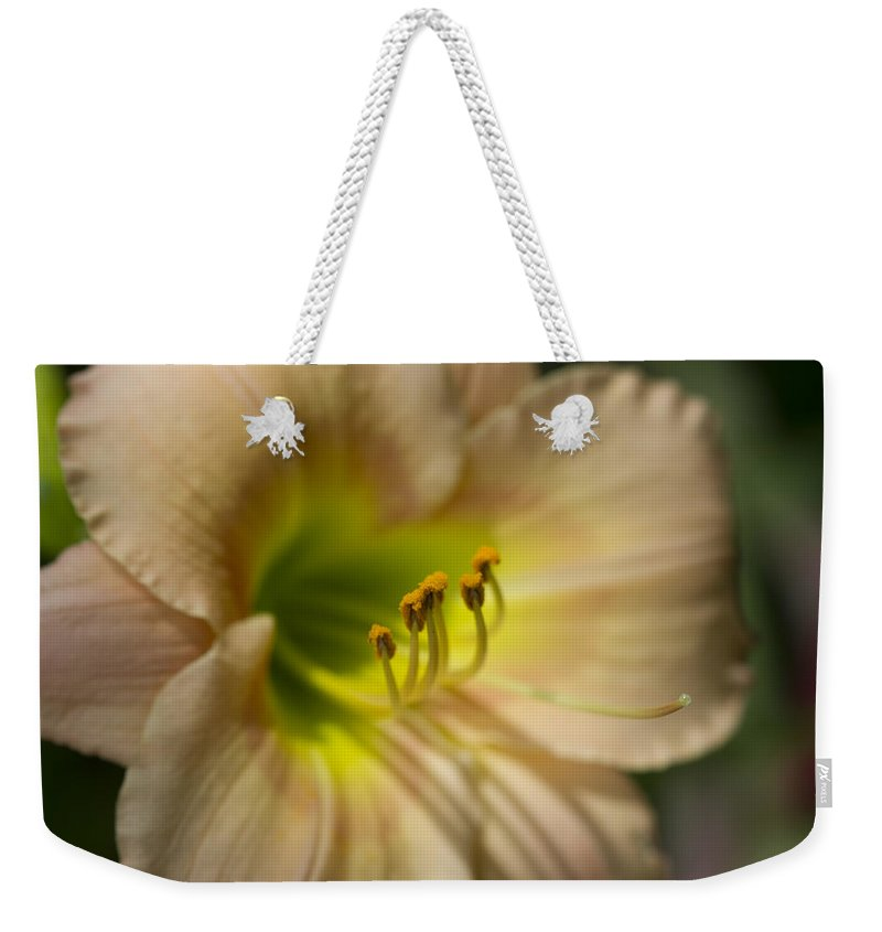 Hemerocallis Weekender Tote Bag featuring the photograph Soft As A Peach Daylily by Kathy Clark