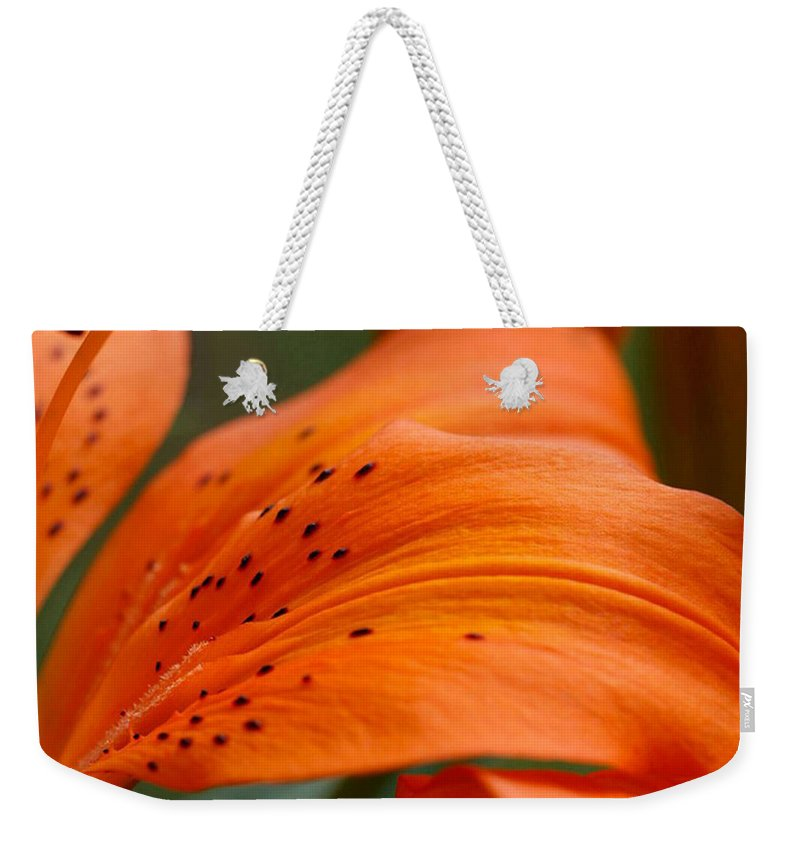 Flower Weekender Tote Bag featuring the photograph Soft Lily by Carol Lynch