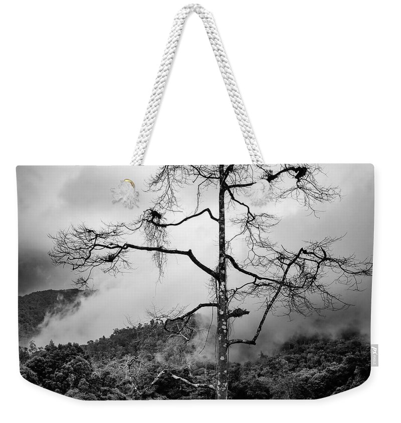 Cameron Highlands Weekender Tote Bag featuring the photograph Solitary Tree by Dave Bowman