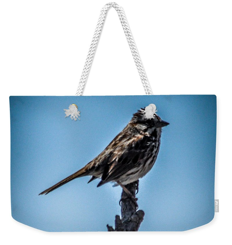 Bird Weekender Tote Bag featuring the photograph Song Sparrow On Top Of Branch by Ronald Grogan