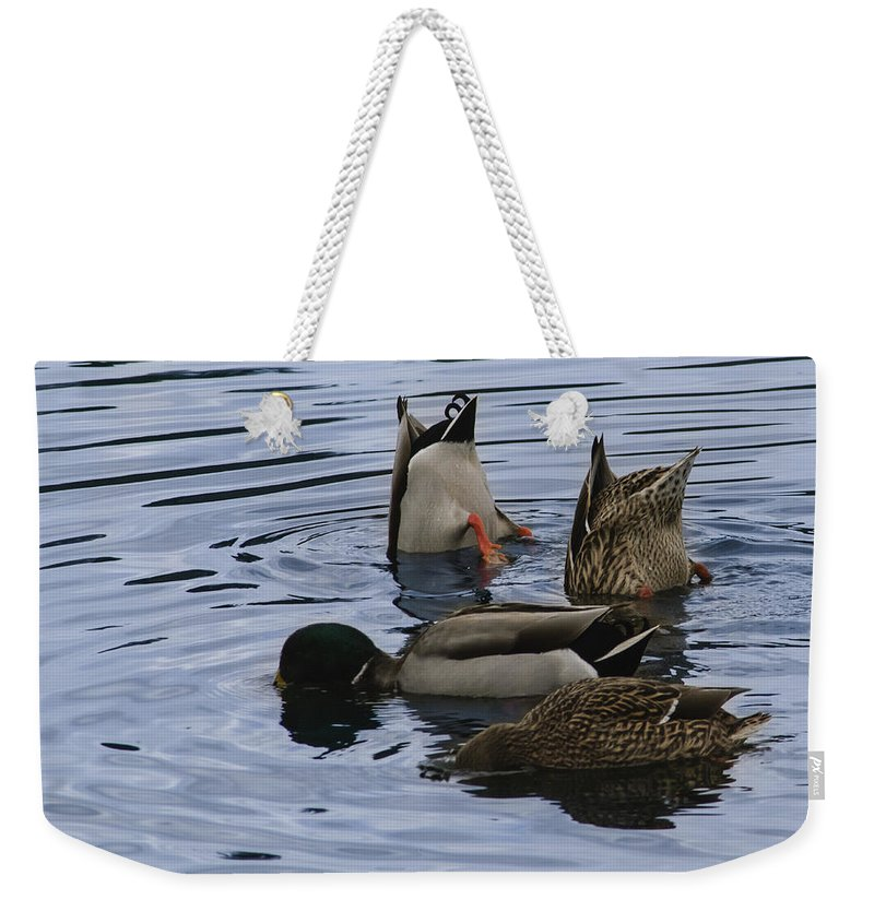 Ducks Weekender Tote Bag featuring the photograph Sorry I Just Don't See It by Dennis Reagan