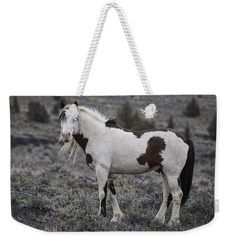 South Steens Wild Stallion Weekender Tote Bag featuring the photograph South Steens Wild Stallion by Wes and Dotty Weber