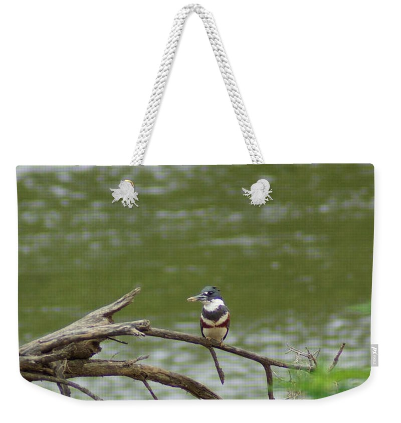 Digital Photography Weekender Tote Bag featuring the photograph Southeastern Kingfisher by Kim Pate