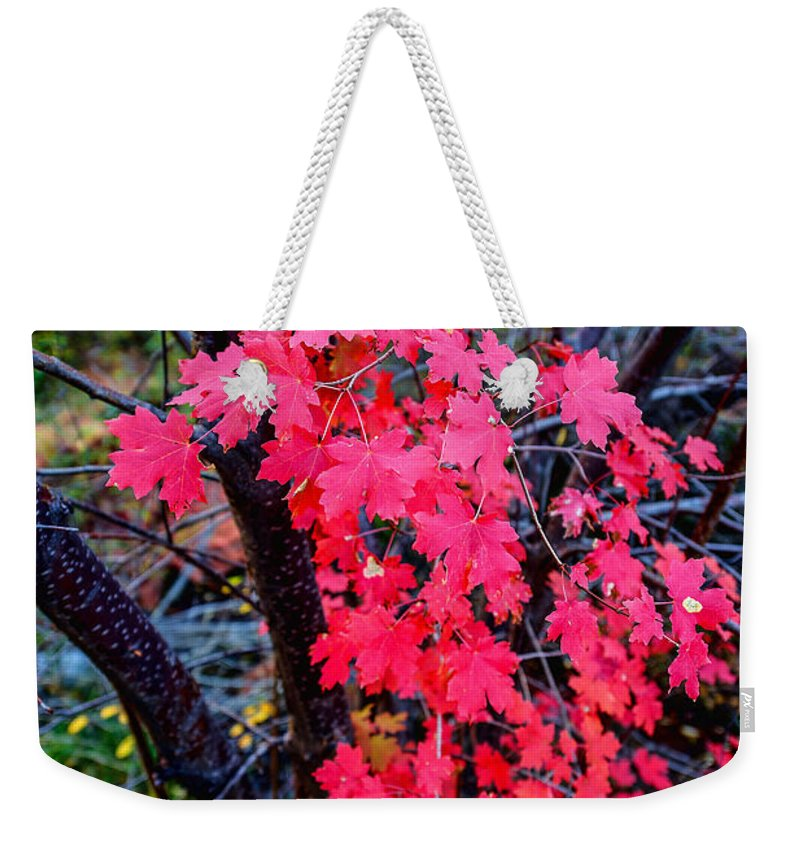 Fall Weekender Tote Bag featuring the photograph Southern Fall by Chad Dutson