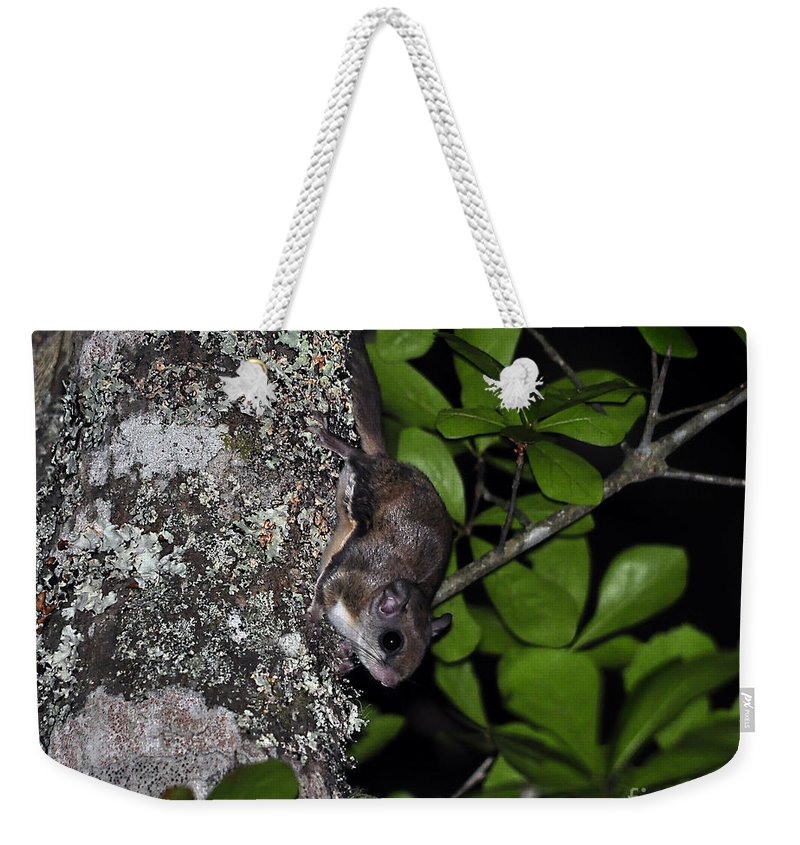Squirrel Weekender Tote Bag featuring the photograph Southern Flying Squirrel by Al Powell Photography USA
