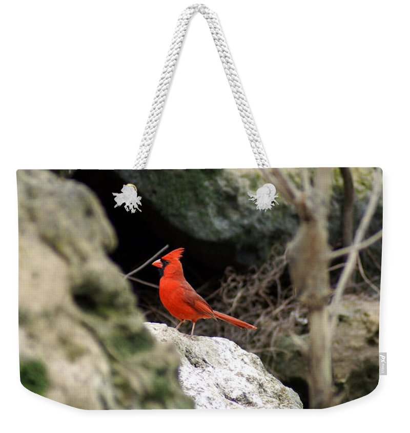 Southern Red Bird Weekender Tote Bag featuring the photograph Southern Red Bird By The Flint River by Kim Pate