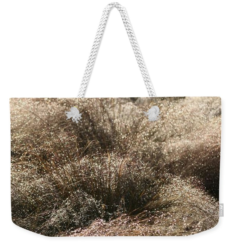 Grasses Weekender Tote Bag featuring the photograph Sparkling Grasses by Nadine Rippelmeyer
