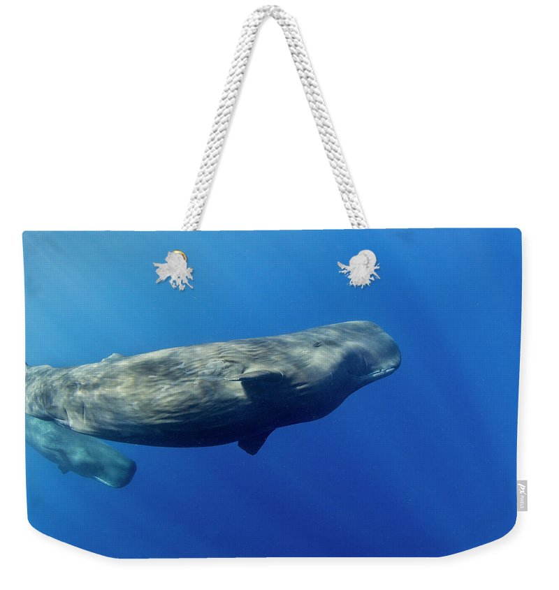 Underwater Weekender Tote Bag featuring the photograph Sperm Whale Pyseter Macrocephalus by Stephen Frink