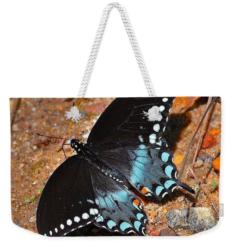 Spicebush Weekender Tote Bag featuring the photograph Spicebush Swallowtail Butterfly by Tara Potts