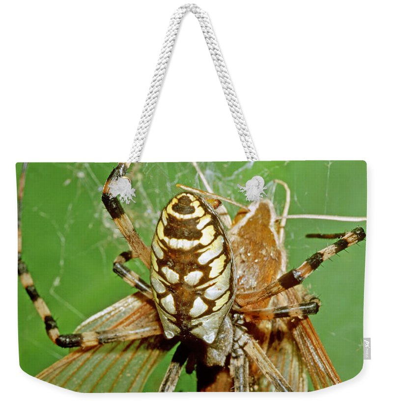Nature Weekender Tote Bag featuring the photograph Spider Eating Moth by Millard H. Sharp