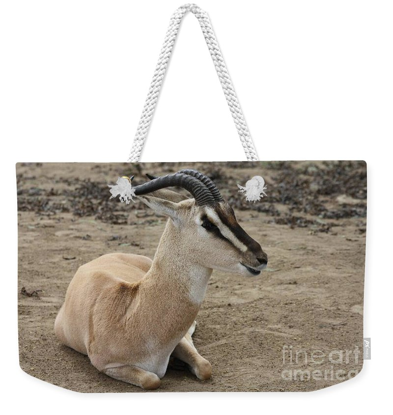 Spiral Horned Antelope Weekender Tote Bag featuring the photograph Spiral Horned Antelope by John Telfer