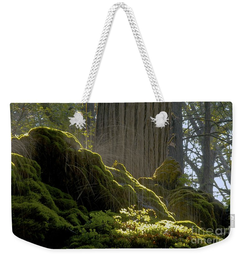 Westcave Preserve Round Mountain Texas Tree Trees Splatter Water Drip Drips Foliage Plant Plants Park Parks Cave Caves Landscape Landscapes Weekender Tote Bag featuring the photograph Splatter by Bob Phillips