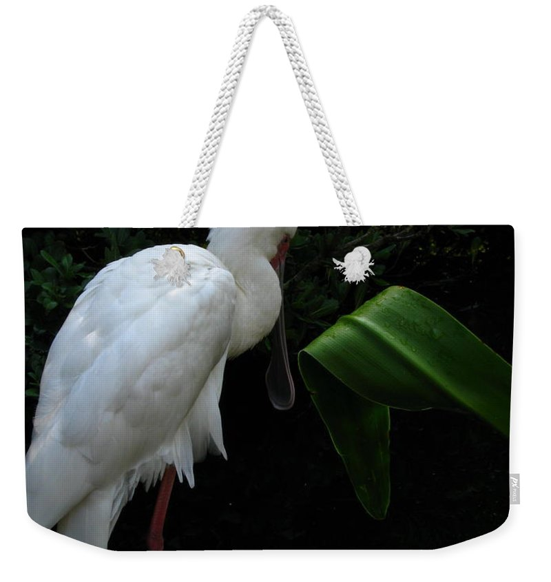 Art For The Wall...patzer Photography Weekender Tote Bag featuring the photograph Spoonbill Morning by Greg Patzer