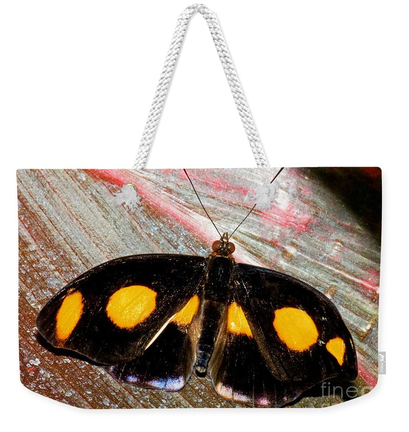 Nature Weekender Tote Bag featuring the photograph Spotted Grecian Shoemaker Butterfly by Millard H. Sharp