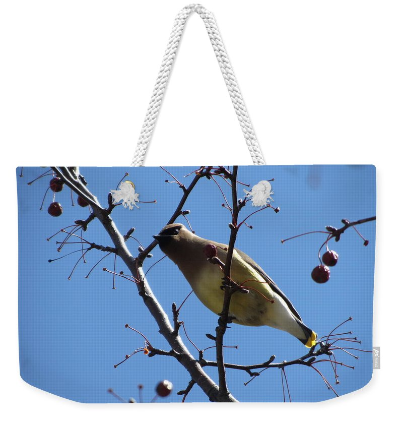 Bird Weekender Tote Bag featuring the photograph Spring Bird And Berries by Anita Burgermeister