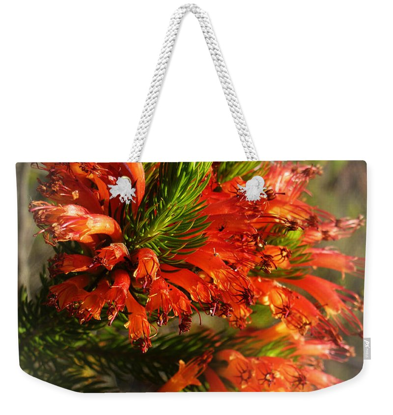 Erica Weekender Tote Bag featuring the photograph Spring Blossom 11 by Xueling Zou