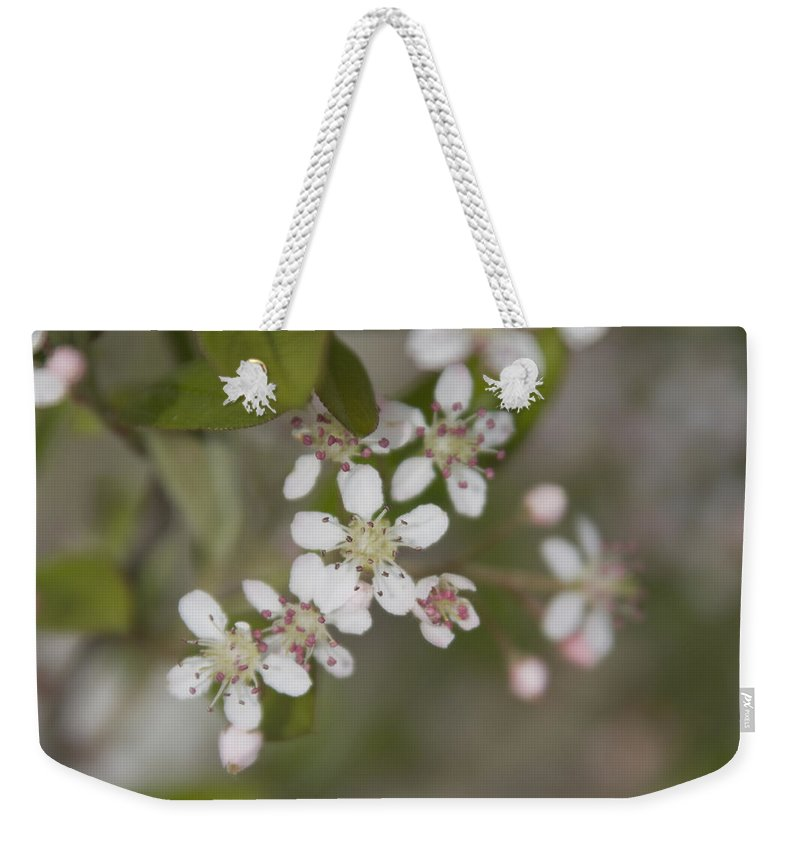 Spring Weekender Tote Bag featuring the photograph Spring Blossoms by Jayne Gohr