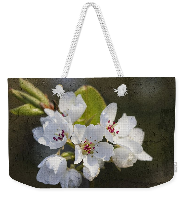 Pyrus Calleryana Weekender Tote Bag featuring the photograph Spring Blossoms by Kathy Clark