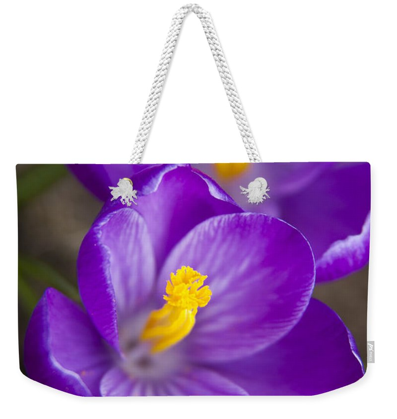 3scape Photos Weekender Tote Bag featuring the photograph Spring Crocus by Adam Romanowicz
