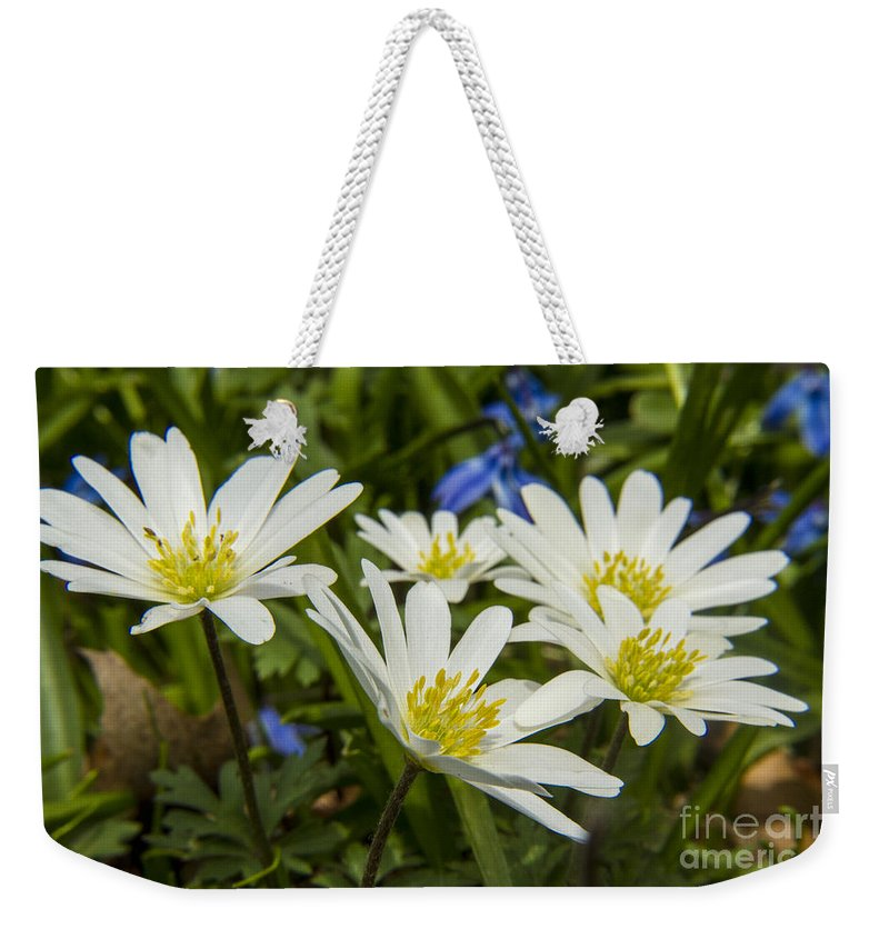 Spring Weekender Tote Bag featuring the photograph Spring Daisies by Darleen Stry