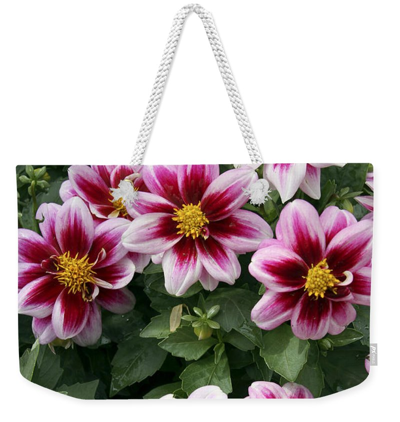 Yellow Weekender Tote Bag featuring the photograph Spring Flowers 4 by Bob Slitzan