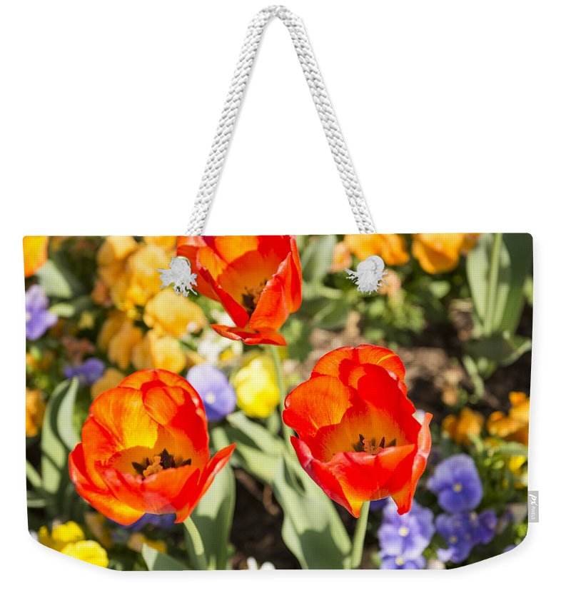 Spring Flowers Weekender Tote Bag featuring the photograph Spring Flowers No. 3 by Greg Hager
