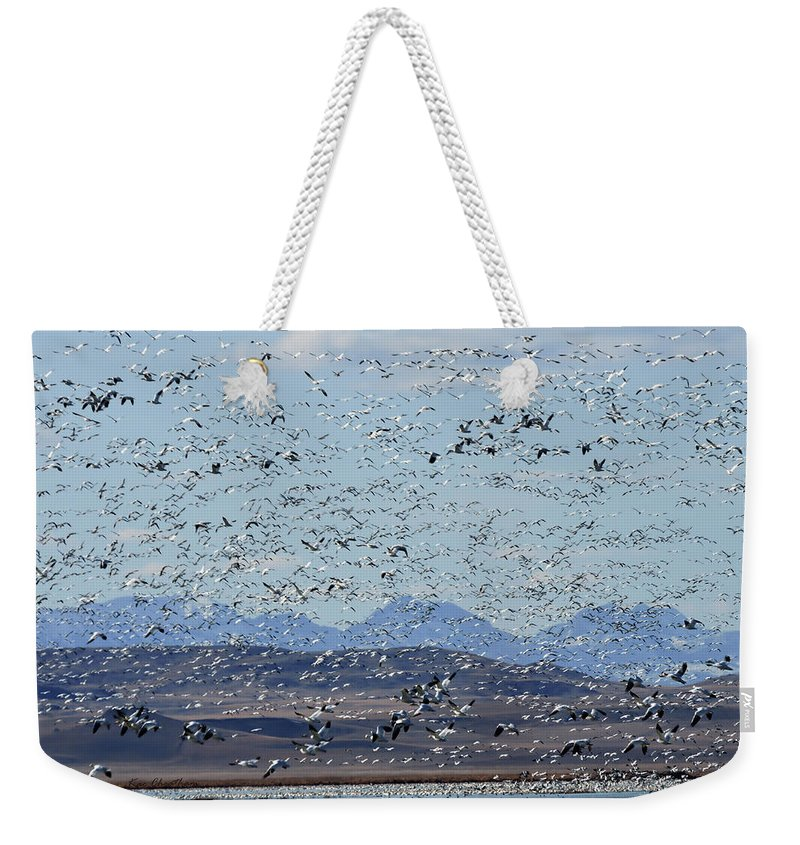 Snow Geese Weekender Tote Bag featuring the photograph Spring Migration #1 by Kae Cheatham