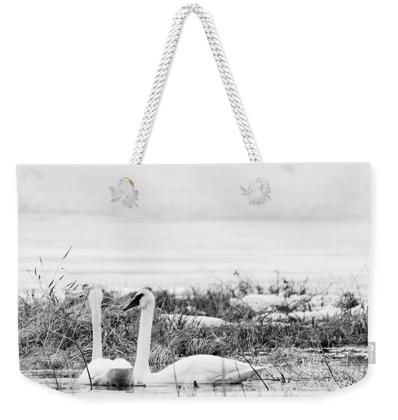 Trumpeter Swan Weekender Tote Bag featuring the photograph Spring Romance by Cheryl Baxter