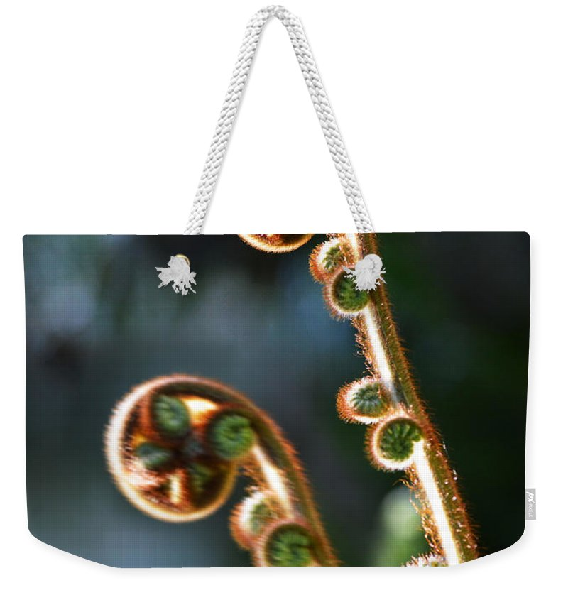 Australia; Floral; Green; Nature; Closeup; Fern; Decor; Plant; Wall Image; Spring; Weekender Tote Bag featuring the photograph Spring Stanza by Xueling Zou
