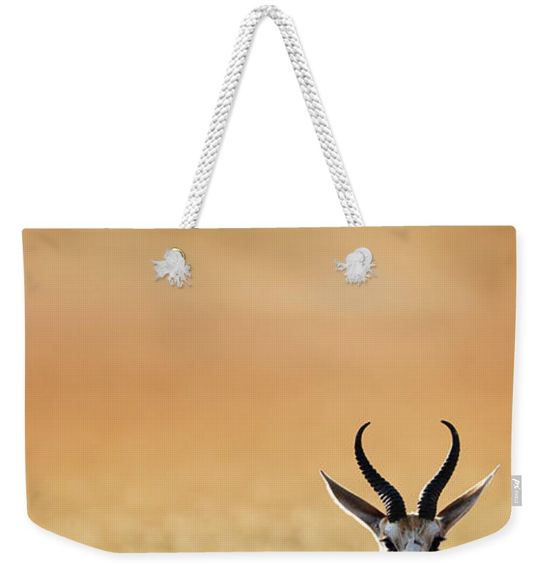 Springbok Weekender Tote Bag featuring the photograph Springbok Resting On Green Desert Grass by Johan Swanepoel