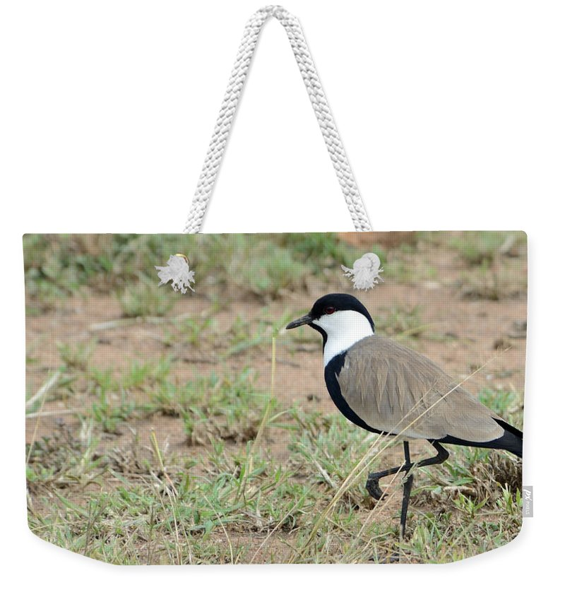 Serengeti Weekender Tote Bag featuring the photograph Spur-winged Lapwing by Ian Ashbaugh