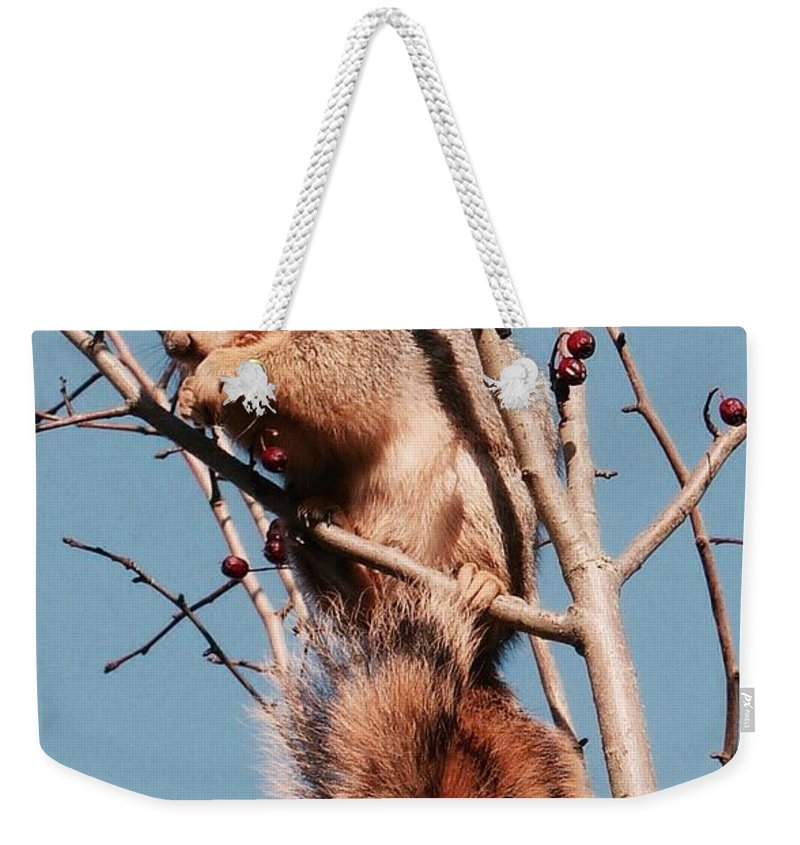 Squirrel Weekender Tote Bag featuring the photograph Squirrel Berry by Susan Garren