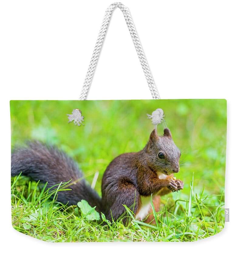 Nut Weekender Tote Bag featuring the photograph Squirrel Eating A Nut In The Grass by Picture By Tambako The Jaguar