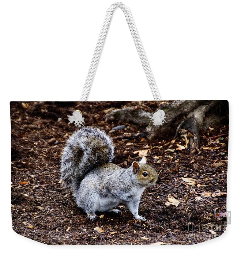 Squirrel Weekender Tote Bag featuring the photograph Squirrel In The Park-boston V6 by Douglas Barnard