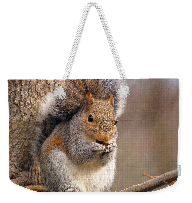Squirrel Weekender Tote Bag featuring the photograph Squirrel by Kerri Farley