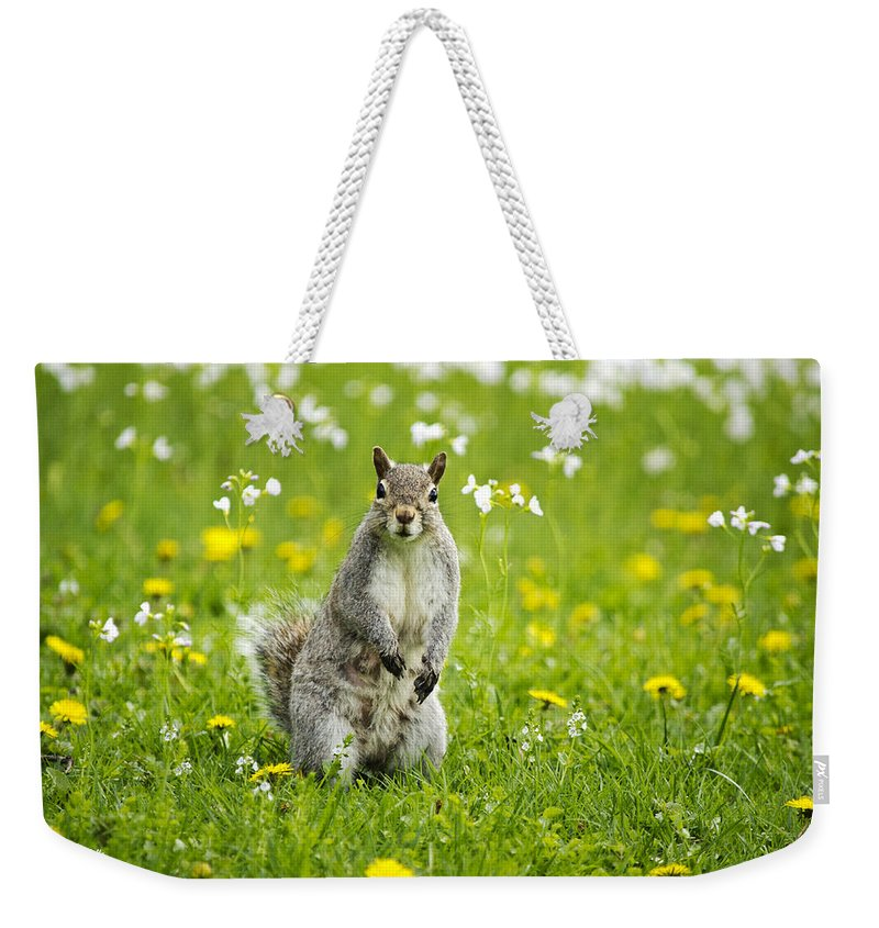 Animal Weekender Tote Bag featuring the photograph Squirrel Patrol by Christina Rollo