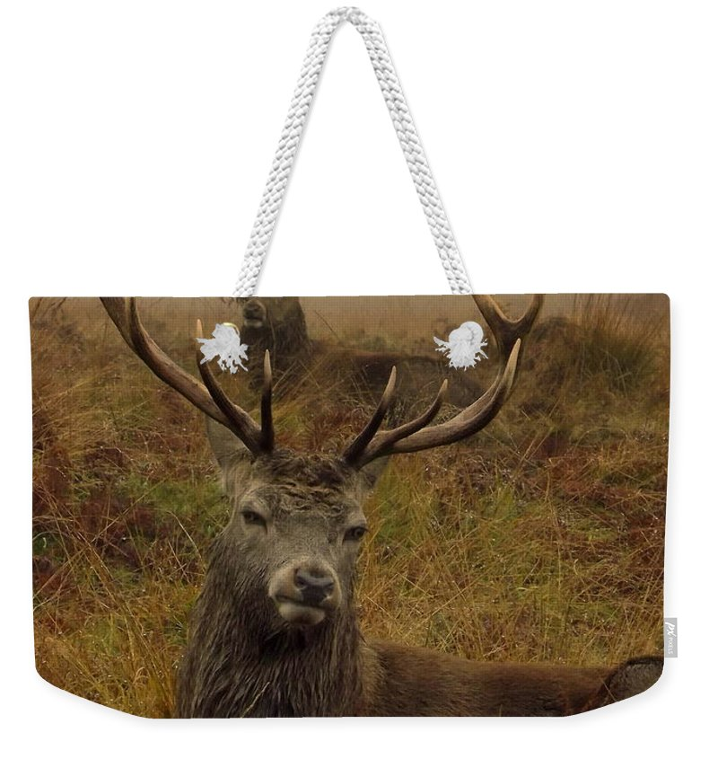 Deer Weekender Tote Bag featuring the photograph Williams Fine Art Stag Party The Series by Linsey Williams