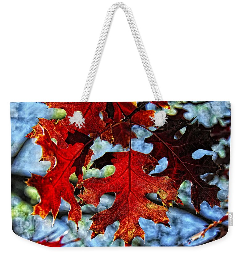 Fall Colors Canvas Print Weekender Tote Bag featuring the photograph Stained Glass by Lucy VanSwearingen