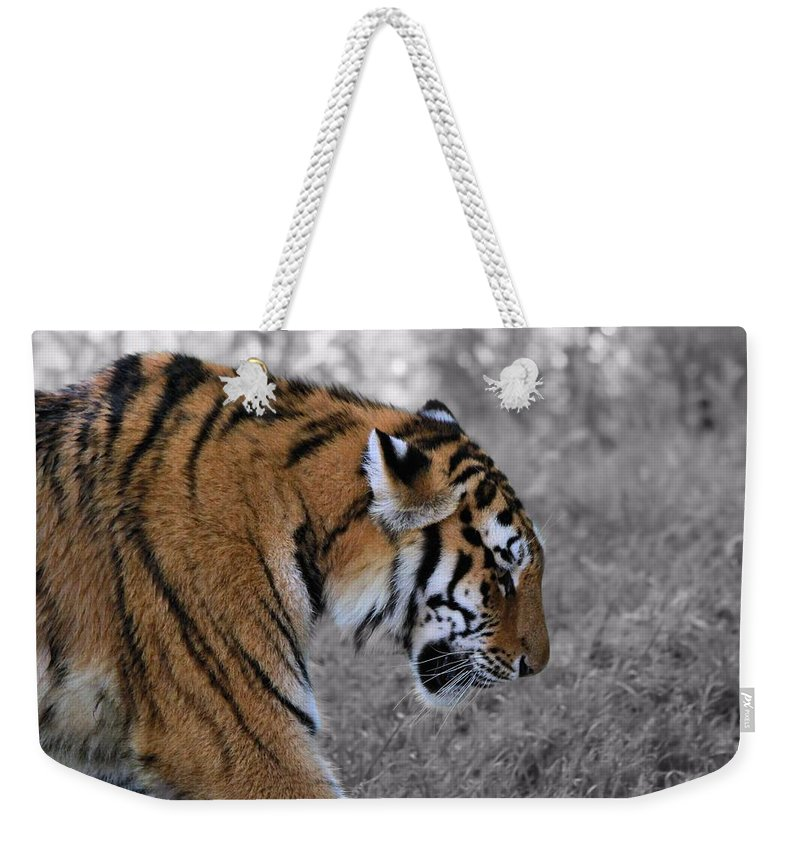 The Tiger Weekender Tote Bag featuring the photograph Stalking Tiger by Dan Sproul