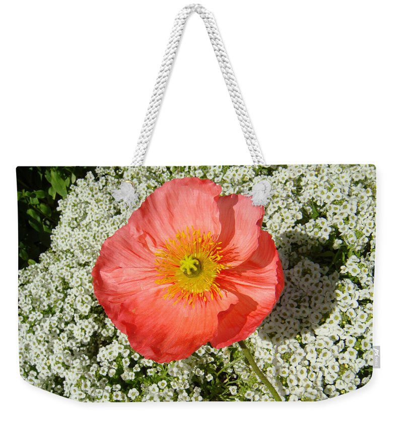 Poppy Weekender Tote Bag featuring the photograph Stand And Be Noticed by Donna Blackhall