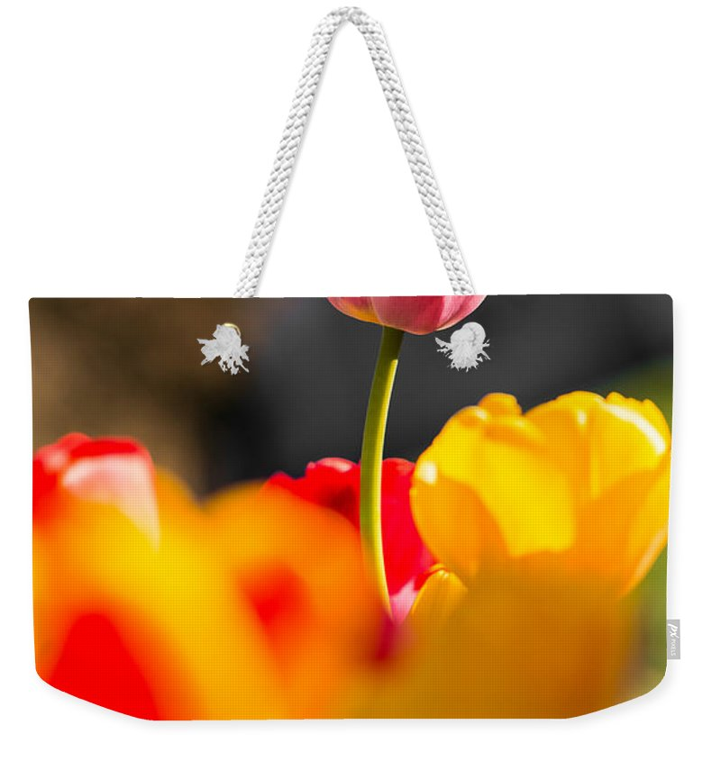 Above Weekender Tote Bag featuring the photograph Stand Tall by Gaurav Singh