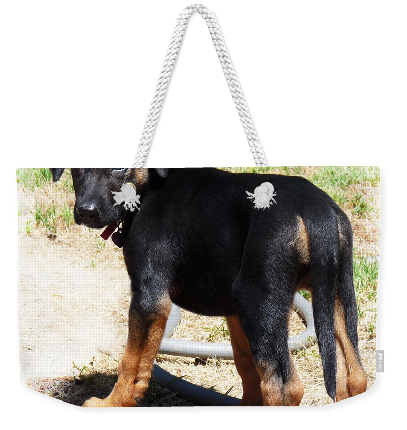 Dog Weekender Tote Bag featuring the photograph Standing Puppy by Rhonda Chase