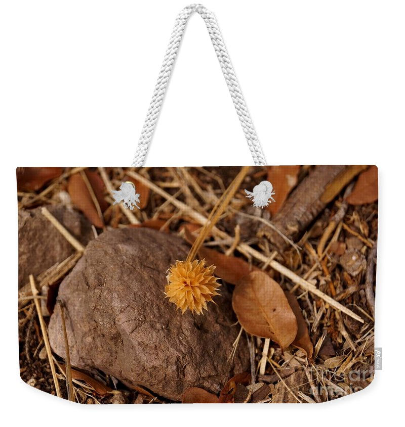 Tree Weekender Tote Bag featuring the photograph Starburst by Kerri Mortenson