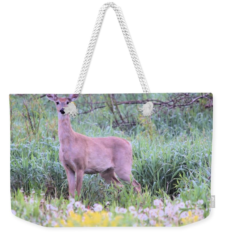 Doe Weekender Tote Bag featuring the photograph Stare Down by Bonfire Photography