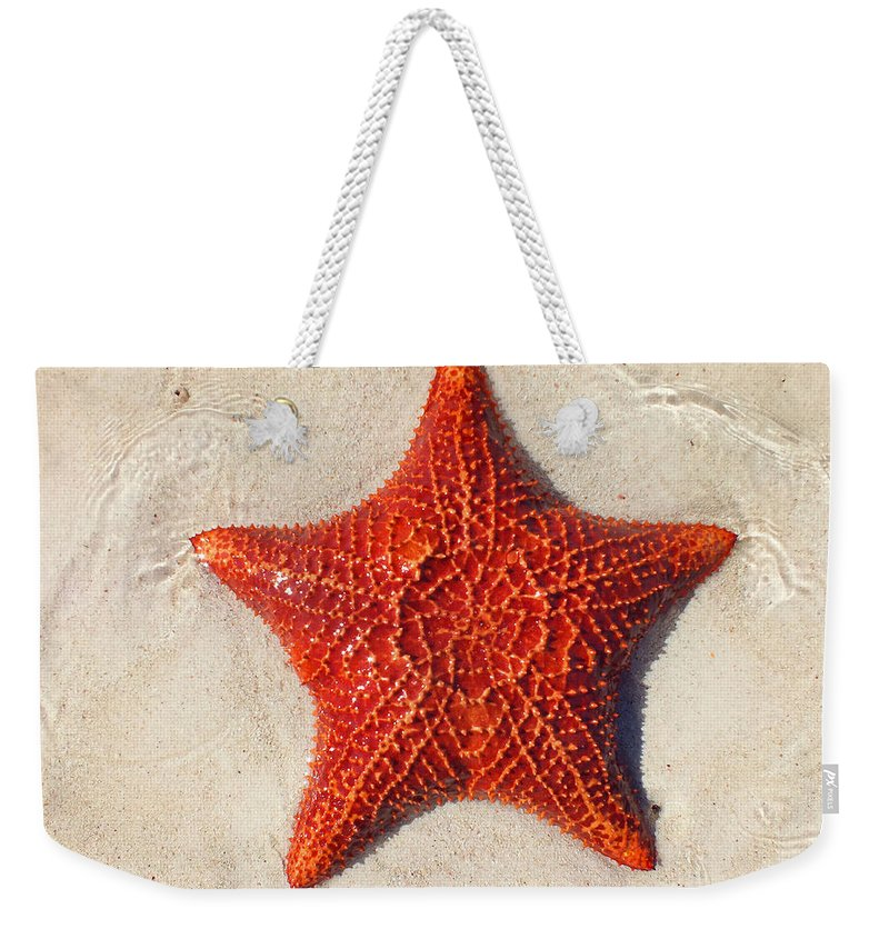 Duane Mccullough Weekender Tote Bag featuring the photograph Starfish 4 Of Bottom Harbour Sound by Duane McCullough