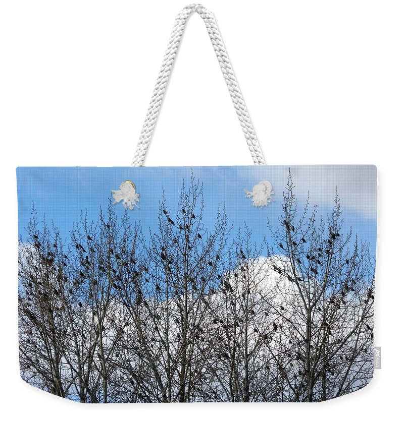 Starlings In The Cottonwoods Weekender Tote Bag featuring the photograph Starlings In The Cottonwoods by Will Borden