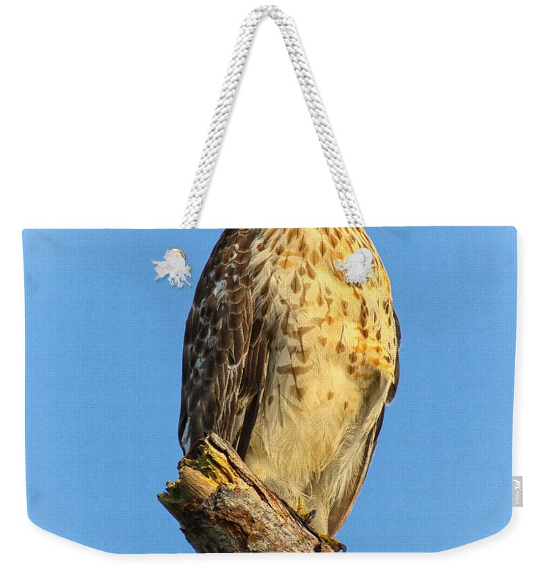 Red-shouldered Hawk Weekender Tote Bag featuring the photograph Stately Red-shouldered Hawk by Barbara Bowen