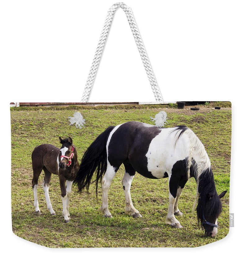 Horse Weekender Tote Bag featuring the photograph Stay Close by Joe Geraci